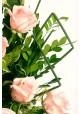 Arreglo con 12 rosas