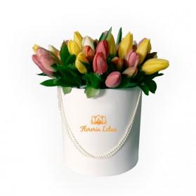 Box de 30 tulipanes