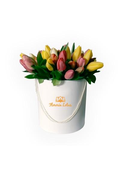 Box de tulipanes