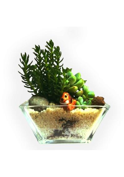 Jardín de minicactus